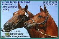 Carte de visite de l`élevage de taille de poneys de sport