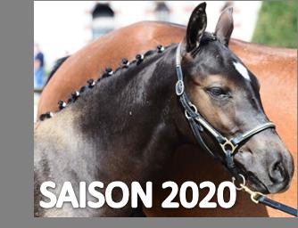 KAP`TAIN de TAILLE Classé 1er des foals mâles et femelles du NHS 2020 fils de Vagabonde de Taille et de Box Office