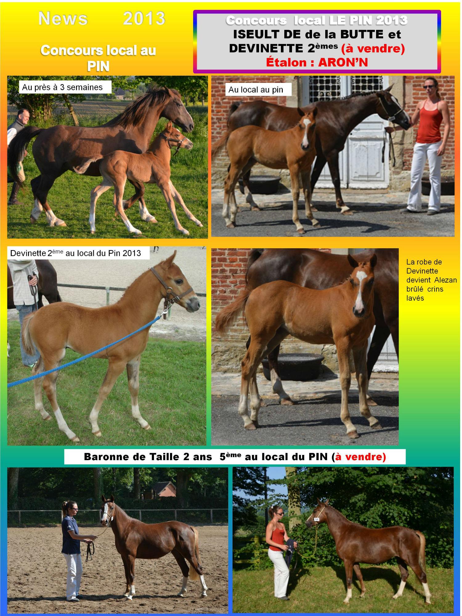 concours élevage le PIN 2013 Devinette de Béchevel et Baronne de taille