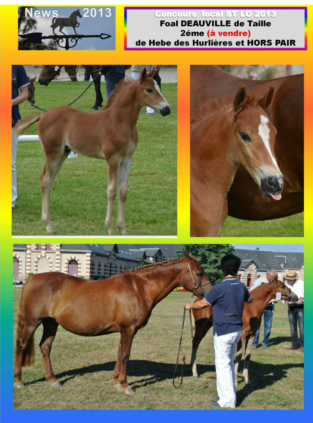 Concours local st lo 2013 foal & poulinière Hebe des hurlière et deauville detaille