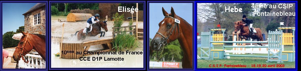 Hebe des Hurlières et Elisée du Vast les 2 premières poulinières poneys de l`élevage de Taille
